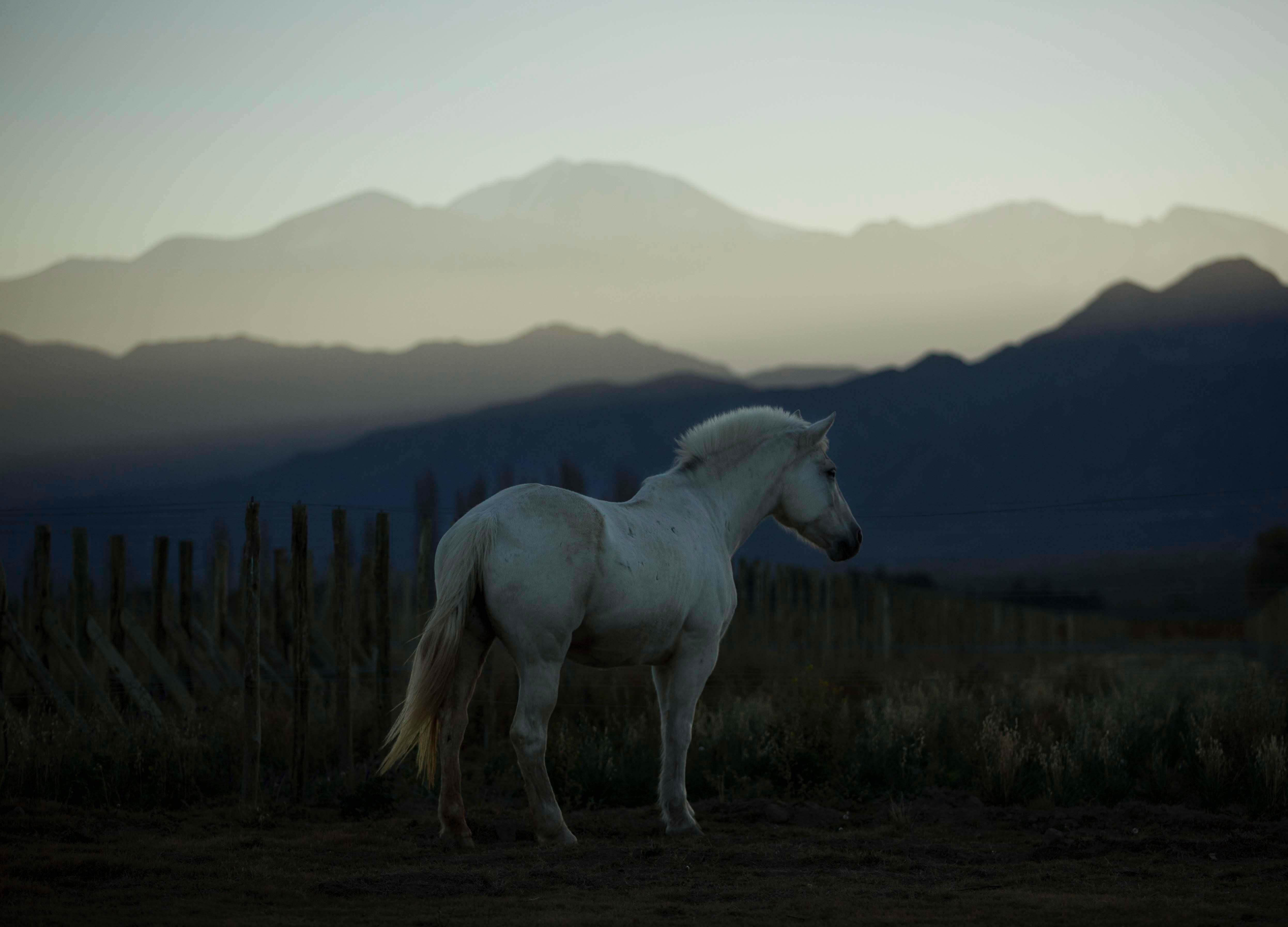 cheval-des-andes-pferdxR9C6p9c8Xx8Y