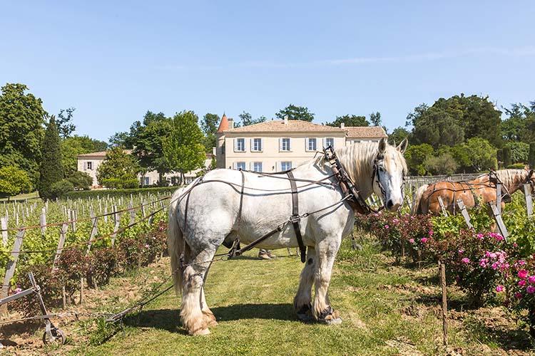 chateau-troplong-mondot-pferd