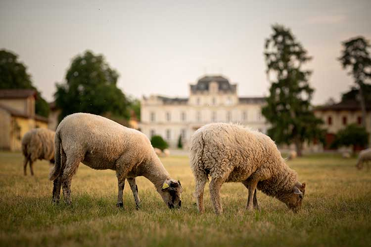 chateau-giscours-margaux-schaffe